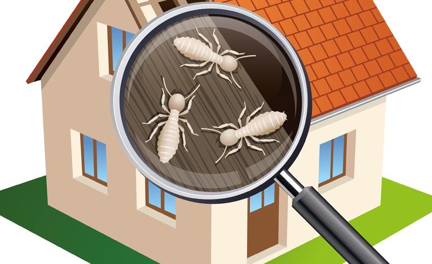 848x518-Termites